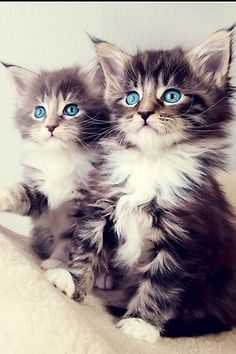 kittens, i want one of them. or both i dont mind :)