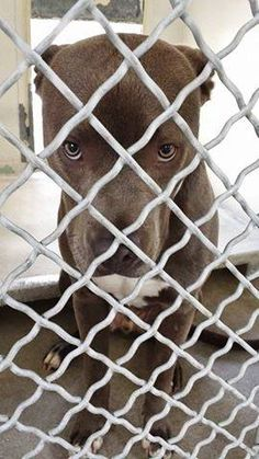 WILSHIRE is so sad after he was left at the shelter when his family moved. They really made a mistake because he is perfect. he likes kids and other dogs, he is housebroken and he is the sweetest puppy you will meet. Please take another look ta this beautiful young boy and SHARE, he doesn't have much time. Thanks! #A4760441 https://www.facebook.com/171850219654287/photos/pb.171850219654287.-2207520000.1412088422./311133035726004/?type=3&theater