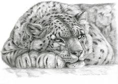 big cat drawings | Leopard Drawing by Svetlana Ledneva-Schukina - Snow Leopard Fine Art ...