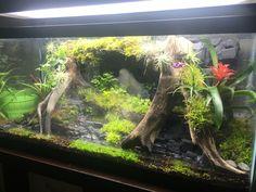 DIY Terrarium for poison dart frogs bassin tortue Tree Frog Terrarium, Terrarium Tank, Snake Terrarium, Terrarium Plants, Vivarium, Paludarium, Turtle Aquarium, Aquarium Fish Tank, Aquarium Ideas