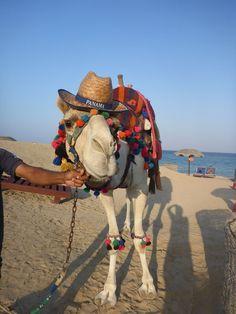 Kamel in Ägypten Oscar Hotel, Marsa Alam, Beach, Animals, Camel, World, Animales, The Beach, Animaux