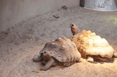 Two turtles photo by: Nea-Mari Vallin