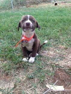 Melvin (aka Bruno), the smiling puppy who went from being abandoned on the street to having a forever home with the help of Rainbow Bridge Can Wait Animal Rescue.