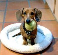 i am totally going to sit here with this tennis ball in my mouth until you play with me.  you think i'm joking?  i am dead serious.  :o/