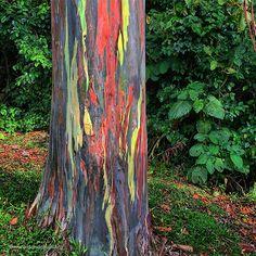 costa-rica-arenal-volcano-rainbow-eucalyptus.jpg (540×540)
