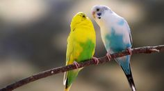 # Canaries