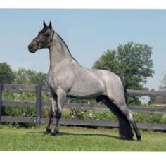 """This looks like my Frosty""""s K. I showed him for years, won many show with him.We had so much fun going to shows and taking care of   our beautiful horses"""