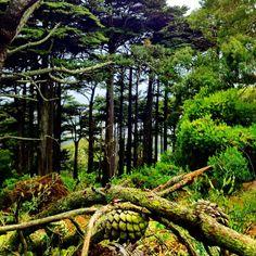 Buena Vista Park in San Francisco, CA