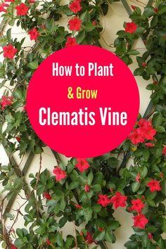1439 Best Growing A Flower Garden Images On Pinterest In 2018 | Flower  Gardening, Planting Flowers And Autumn Garden