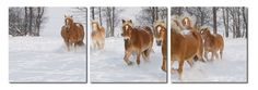 Horse Herd Mounted Photography Print Triptych