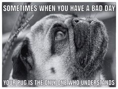 So true my sweet pug 💗 Pug Quotes, Pugs And Kisses, Baby Pugs, Pug Pictures, Pug Puppies, Cute Pugs, Pug Love, Dog Cat, Cute Animals
