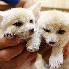 Mirá a los 20 animales más tiernos del mundo