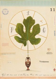 Fig with #Greek Vase. MF Cardamone. Selby Fleetwood Gallery. #art #fineart