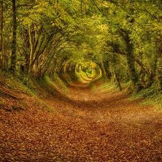 Places You Love The Most - Beautiful Places Around The World ~ this path/road looks like you're going into a swirling green tunnel. A neat effect!