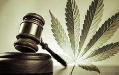 Ein Gesetz muss her - Cannabis ist gesund!