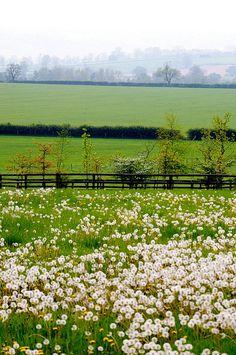 Spring, Oxfordshire