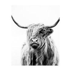 Portrait Of A Highland Cow Poster by Dorit Fuhg Cow Wallpaper, Cow Art, Thing 1, Canvas Prints, Art Prints, Canvas Art, Buy Frames, Metal Art, Fine Art America