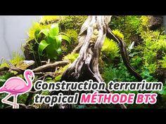 Aquascaping, Exo, Aquarium Terrarium, Jewel, Plants, Tropical Plants, Gem, Jewels, Plant