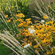 29 отметок «Нравится», 1 комментариев — Ландшафтная Мастерская (@lenotr_park) в Instagram: «#сад #озеленение #ландшафт #ландшафтныйдизайн #garden #gardening #landscape #landscape_design…»