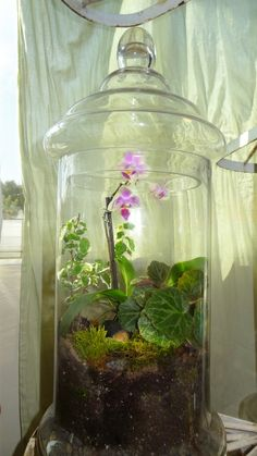 Orchid terrarium created by sagecats.tumblr.com
