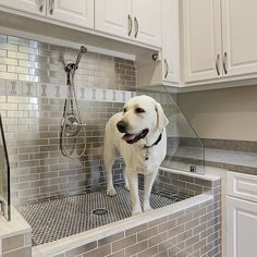 dog shower in laundry room garage \ dog shower in laundry room ; dog shower in laundry room diy ; dog shower in laundry room garage ; dog shower in laundry room ideas ; dog shower in laundry room built ins ; dog shower in laundry room utility sink Dog Bathroom, Laundry Room Sink, Laundry Room Design, Laundry Rooms, Dog Bathing Station, Diy Dog Wash, Küchen Design, House Design, Interior Design