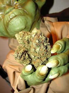 I got You are MASTER YODA.! Which Strain Of Weed Are You?