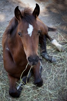 ☀ This  foal looks like one I showed years ago ~  He was aptly named:  Doin'  Time ~