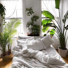 Preghiera per l'universo Stiamo cercando una nuova casa perchè quella in cui siamo è troppo piccola se potessi scegliere ne vorrei una con queste finestre. Le piante e il letto li metto io al resto pensaci tu grazie. . . . . by @hannahleeduggan ( # @thesill ) . . . . . #bottegabotanica #ilpollicenerononesiste #airplants #palms #pothosplant #bedroom #windows #plantsofinstagram #interiordetails #sunnyplace #happyplant #plantsmakepeoplehappy #plantlady #plantladyisthenewcatlady #urbanjungleblog