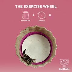 The Exercise Wheel IKEA Cat Hack