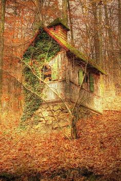 Old Shack in the Fall nature forest autumn fall old weathered shack vine climbing