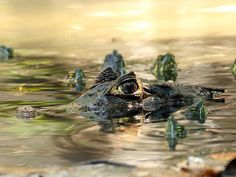 Surrounded Among the Turtles... photo by Anthony Davis