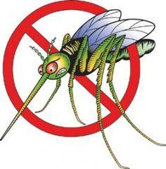 DIY Mosquito trap...