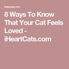 8 Ways To Know That Your Cat Feels Loved - iHeartCats.com