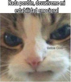 """94 Me gusta, 0 comentarios - Gatos Cool (@gatoscooloficial) en Instagram: """". . . . #memesdegatoscool #gatoscool😸 #gatos_cool #ctm #gato #gatos #gatitos #gatito #estabilidad…"""""""