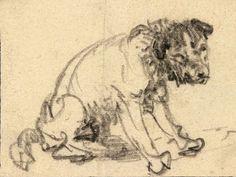 Rembrandt van Rijn, the Braunschweig terrier , around Herzog Anton Ulrich Museum in Braunschweig. The Herzog. Rembrandt Drawings, Rembrandt Art, Rembrandt Etchings, Anton, Amsterdam, Terrier, Chalk Drawings, Herzog, First Art
