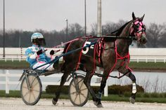 Wiggle It Jiggleit sets track record in Battle of Lake Erie Track Records, Harness Racing, Lake Erie, Horse Pictures, Horses, Battle, Empire, Animals, Animaux