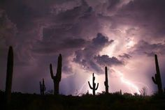 Photo by Cathy Kaashoek Scottsdale Az 7/19/13.