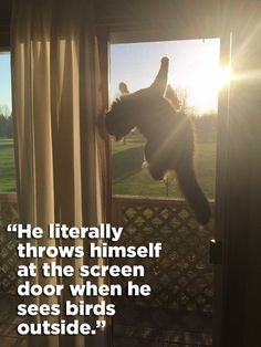 And finally, The Mighty Hunter | 21 Really Weird Things That Cats Actually Do