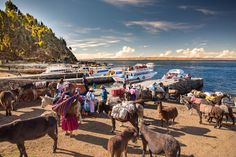 The Area Around Lake Titicaca in Peru and Bolivia - Travelhackers Lake Titicaca Peru, Bolivia, New Pictures, Crowd, Camel, Animals, Animais, Animales, Animaux