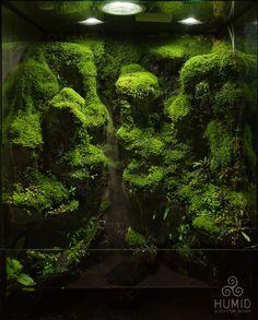 Frog Terrarium, Aquarium Terrarium, Reptile Terrarium, Nature Aquarium, Aquarium Fish, Terrarium Scene, Aquarium Aquascape, Aquascaping, Moss Garden