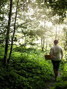 Villiyrtit omalta pihalta | Meillä kotona Bradley Mountain, Yard, Couple Photos, Nature, Tips, Couple Shots, Patio, Naturaleza, Couple Photography