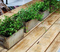 Metal tins/drawers for plants