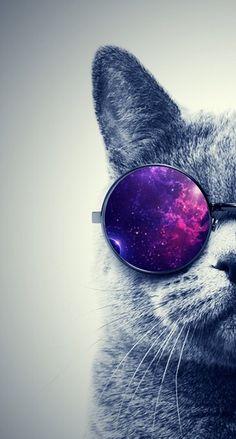 Understanding Your Cat's 5 Senses