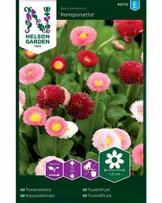 Sievä kasvutapa. Nelson Garden, Bellis Perennis, Perennials, Plants, Margarita Flower, Daisy, Plant, Perennial, Planets