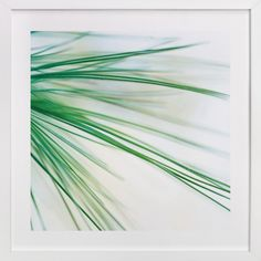 Pine Study 1 by Smile Peace Love at minted.com