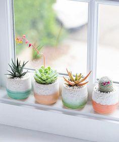 <3 kwitnący kaktus