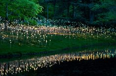 """Bruce Munro """"Light Installations"""" Wish I could got to Philly before October to see it."""