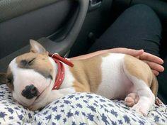 Zoie sleep psssss🤫