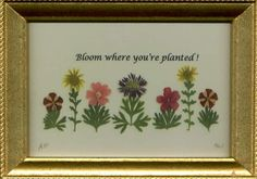 bloom where you're planted - Google Search