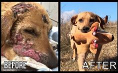 Dog Goes From Hopeless To Happy In Remarkable Before & After Transformation Videos